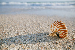 Nautilus shell on white Florida beach sand under the sun light Royalty Free Stock Image