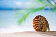 Nautilus shell on white Florida beach sand under the sun light Stock Image