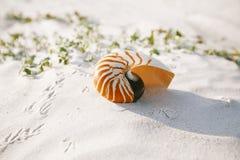 Nautilus shell on white Florida beach sand under the sun light Royalty Free Stock Images