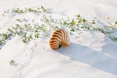 Nautilus shell on white Florida beach sand under the sun light Stock Photo
