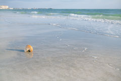 Nautilus shell on white Florida beach sand under the sun light Stock Photos