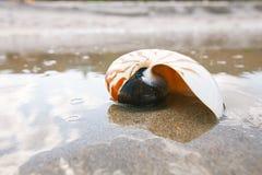 Nautilus shell on white Florida beach sand under the sun light Royalty Free Stock Photography