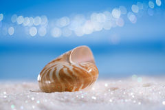 Nautilus shell on white glitter and blue background royalty free stock photo