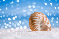 Nautilus shell on white glitter and blue background stock photography