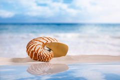 Nautilus shell on white sand with reflection under the sun light Royalty Free Stock Images