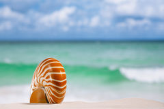 Nautilus shell on white sandy beach sand under the sun light. Shallow dof Royalty Free Stock Photography