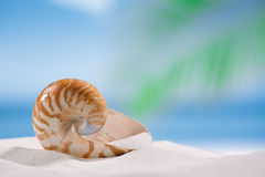 Nautilus shell on white sandy beach sand under the sun light Stock Photography