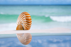 Nautilus shell on white sandy beach sand under the sun light Stock Images