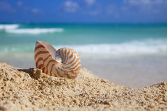Nautilus shellon beach  and blue tropical sea. Shallow dof Royalty Free Stock Photos