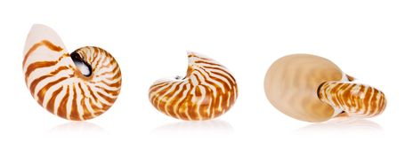Nautilus-Shells Stockfoto