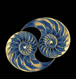 Nautilus shells. Two perfect and amazing fibonacci patterns in a nautilus shell Royalty Free Stock Images