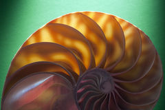 Nautilus spiral shell section Stock Images