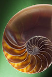Nautilus spiral shell section Stock Image