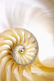 Nautilus spiral shell section Stock Photography