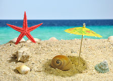 Nautilus under sun umbrela shadow Royalty Free Stock Photography