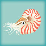 Nautilus vector. Colorful nautilus vector drawing Stock Image