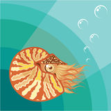 Nautilus vector Royalty Free Stock Images