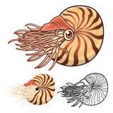 Nautilus-Zeichentrickfilm-Figur der hohen Qualität umfassen flaches Design und Linie Art Version Stockbilder