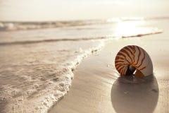 Nautilusmuschel auf einem Seeozean-Strandsand stockfoto