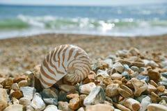 Nautilusmuschel auf peblle Strand und Meereswellen Lizenzfreie Stockbilder