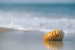 Nautilusmuschel auf weißem Florida-Strandsand unter dem Sonnenlicht Lizenzfreies Stockbild
