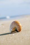 Nautilusmuschel auf weißem Florida-Strandsand unter dem Sonnenlicht Stockfoto
