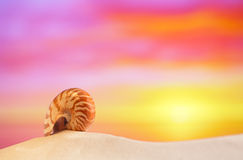 Nautilusmuschel auf weißem Strandsand, gegen Meereswellen Stockbilder