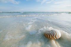 Nautilusmuschel mit Seewelle, Florida-Strand unter dem Sonne ligh Lizenzfreies Stockbild