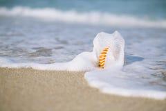 Nautilusmuschel mit Seewelle, Florida-Strand unter dem Sonne ligh Lizenzfreie Stockbilder
