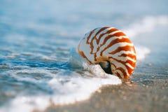 Nautilusmuschel mit Seewelle, Florida-Strand unter dem Sonne ligh Lizenzfreie Stockfotografie