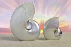 Nautilusmuscheln Lizenzfreie Stockfotografie