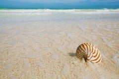 Nautilusseeoberteil auf goldenem Sandstrand im weichen Sonnenlicht Lizenzfreies Stockbild