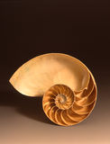 Nautilusshell Stockfotos