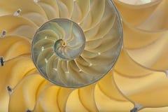 Nautilusshell stockbilder