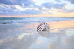 Nautilusshell auf Seestrand, Sonnenaufgang. lizenzfreies stockfoto