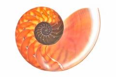 Nautilusshell dwarsdoorsnedespiraal stock foto's