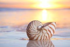 Nautilusshell im Meer, Sonnenaufgang Stockfoto