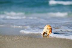 Nautilusshell met overzeese golf, het strand van Florida onder de zon ligh Royalty-vrije Stock Afbeelding