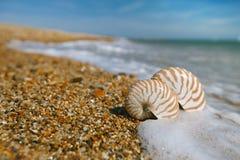 Nautilusshell op de overzeese golven van het pebllestrand en Stock Afbeeldingen