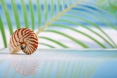 Nautilusshell op nat wit glas met bezinning Stock Foto's