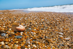 Nautilusshell op pebllestrand Stock Afbeelding