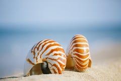 Nautilusshell op wit het strandzand van Florida onder het zonlicht Stock Afbeeldingen