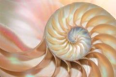 Nautilusshell van de de symmetriedwarsdoorsnede van Fibonacci van de de structuurgroei de spiraalvormige gouden verhouding royalty-vrije stock foto