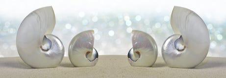 Nautilusshells Royalty-vrije Stock Afbeeldingen
