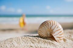 Nautilusskal med havet, stranden och seascape, grund dof Royaltyfri Bild