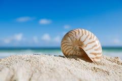Nautilusskal med havet, stranden och seascape, grund dof Arkivfoto