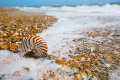Nautilusskal på pebllestranden Royaltyfria Bilder