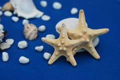 Nautique, concept de Marrine Étoiles de mer avec Shell sur un fond bleu avec l'espace de copie Été Holliday photographie stock libre de droits