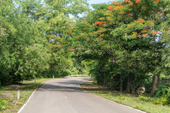 Nautural forests. Natural forests and beautiful mountains in countryside Ratchaburi Thailand Stock Photo