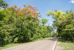 Nautural forests. Natural forests and beautiful mountains in countryside Ratchaburi Thailand Royalty Free Stock Image